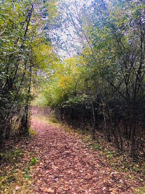 outdoor path at a nature center
